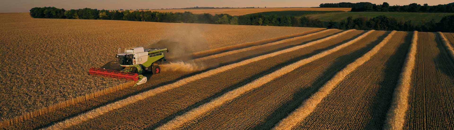 Czyszczenie i zaprawianie nasion